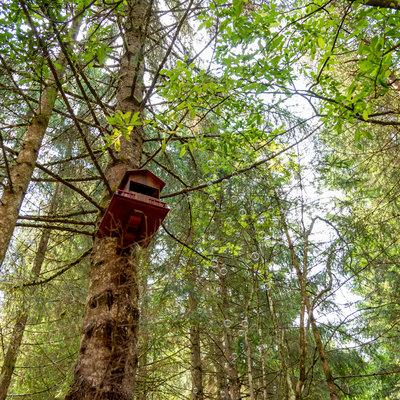 Casetta Gnomi sull'albero