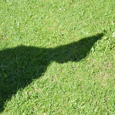 ombra gnomesca