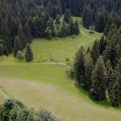 sentiero nei boschi w